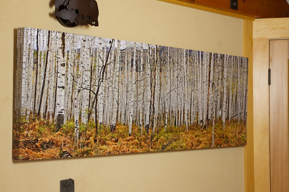 Aspen And Ferns (A 60 x 20 canvas print galley wrapped)\