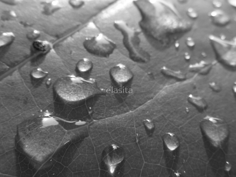 Wet Leaf BW by elasita