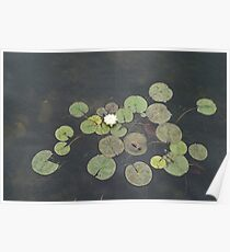 Just Chillin - A Little Turtle Relaxing on a Waterlily Leaf Poster