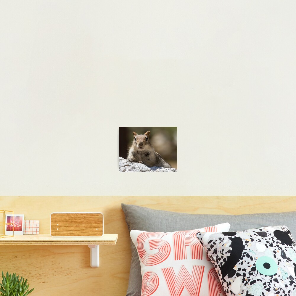 Face the squirrel Photographic Print