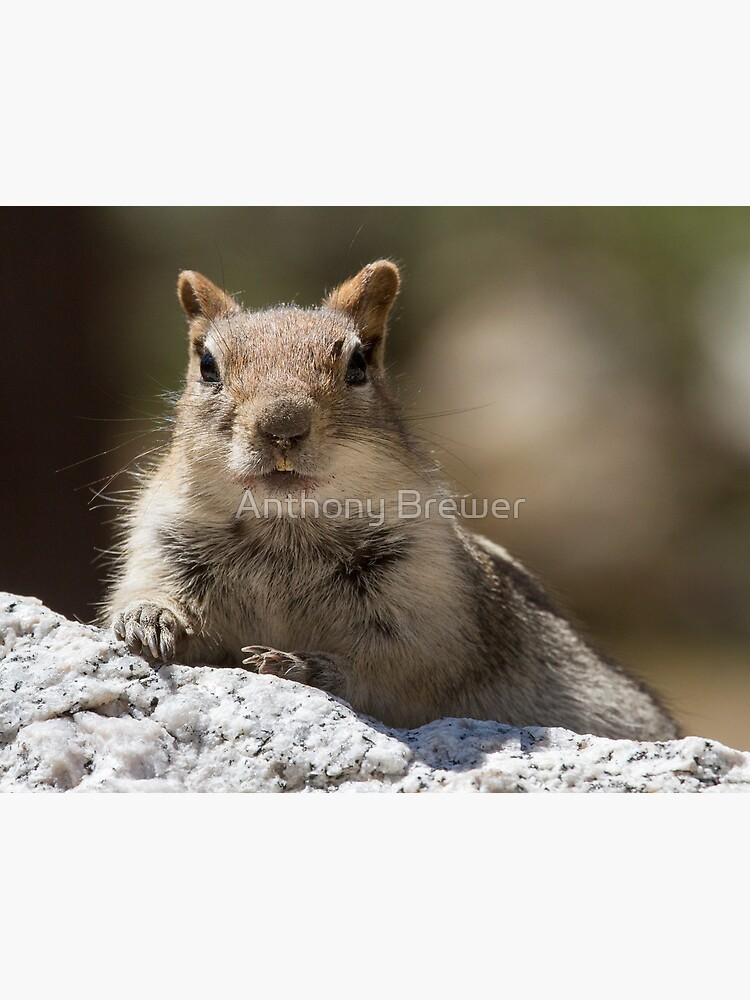 Face the squirrel by dailyanimals