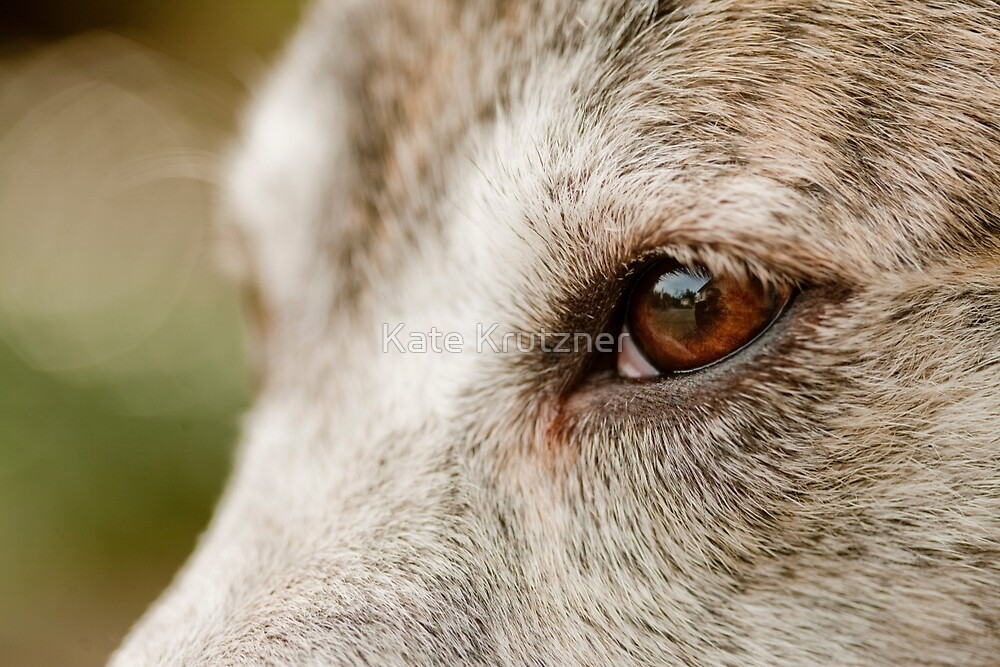 Mustang Eye- Animal Collection  by Katie Krutzner