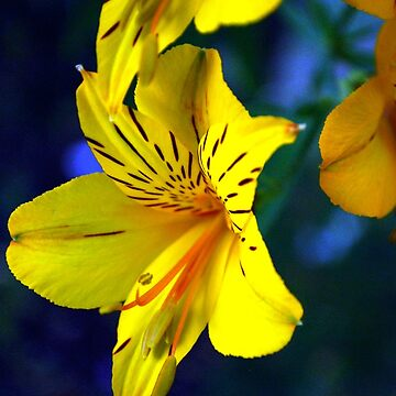 Yellow flower by cathysroom