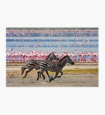 Racing Stripes Photographic Print