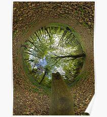 Butterfly Sculpture in Prehen Woods, Derry (Sky-in) Poster