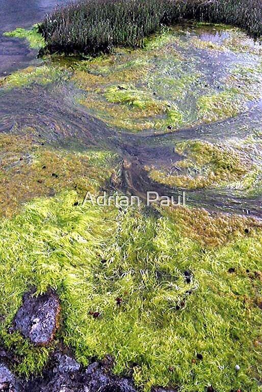 Rock Pool at Low Tide, Cape Leeuwin, Western Australia by Adrian Paul