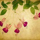 Fuchsia 1 by Rebecca Cozart