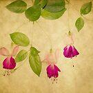 Fuchsia 2 by Rebecca Cozart