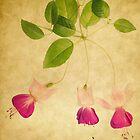 Fuchsia 3 by Rebecca Cozart