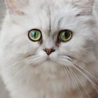 The Green-eyed Cat by Ikramul Fasih