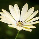 Beautiful Flowers by JEZ22