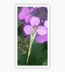 Macro of Butterfly on Wallflower Sticker