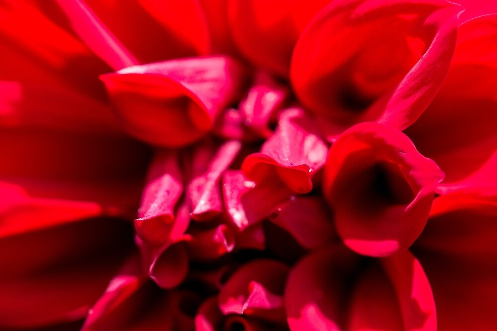 Red by FrankThomas