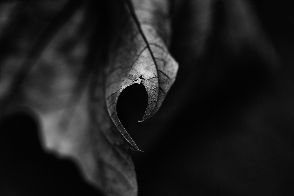 Leaf I by FrankThomas