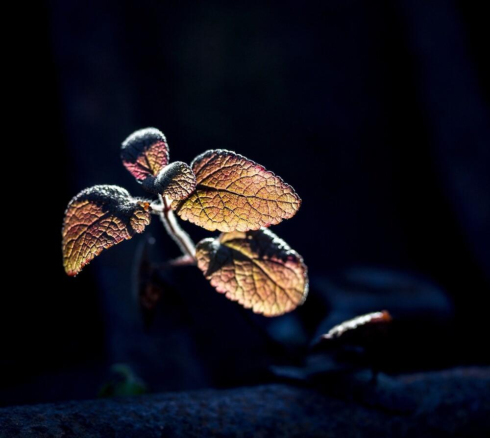 Glow by FrankThomas
