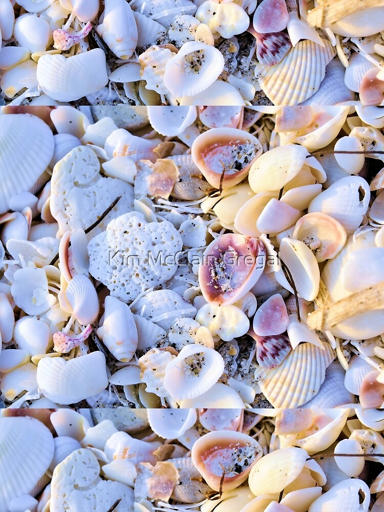 Seashells at Sunset Have Great Colors! by fotokmcc