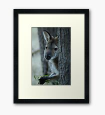 Lunch Time Framed Print