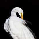 Always Egrets by Ruth  Jolly