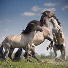 Dancing Horses by Henri Ton