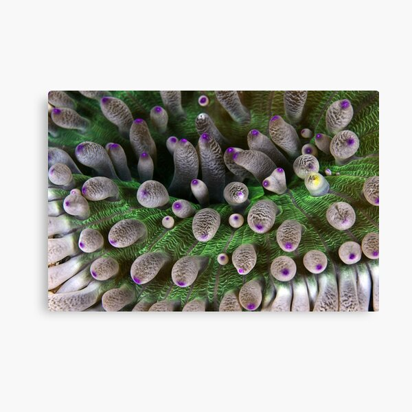 Abstract anemone Canvas Print