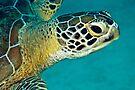 Green sea turtle portrait by David Wachenfeld