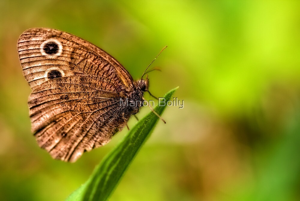 relaxing butterfly by Manon Boily