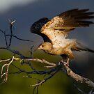 Sunset Kite by byronbackyard