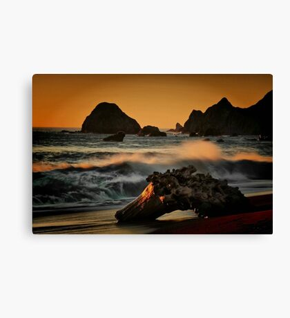 Driftwood on the Sand Canvas Print