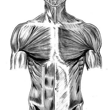 human body anatomy by Robykat