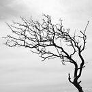 The Tree by Jonas Bohlin