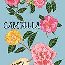 Camellias by Anna Lloyd