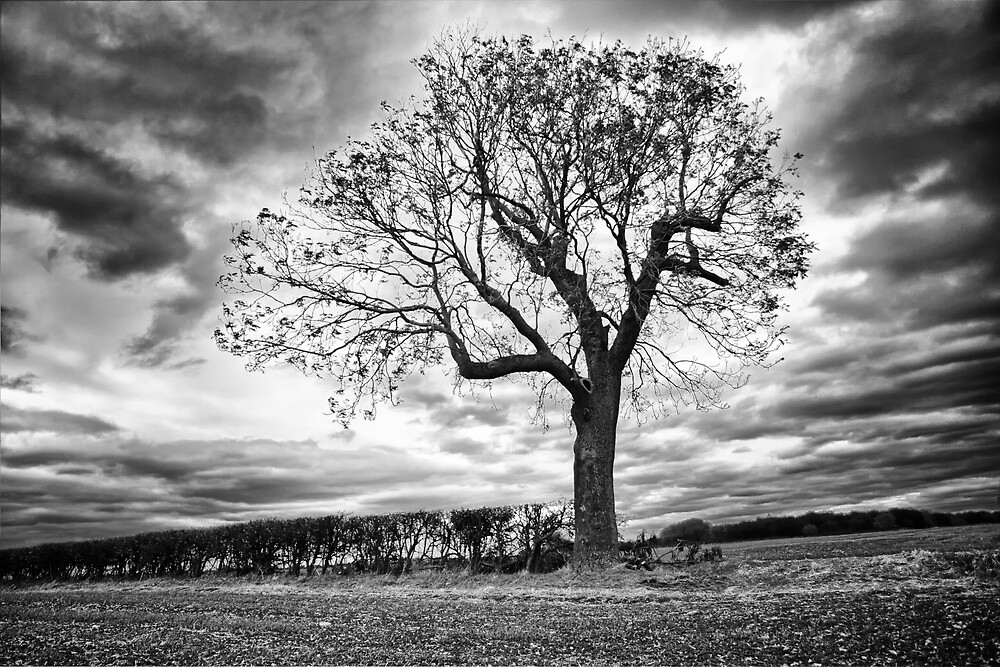 End of Summer - Black and white Tree by Vicki Field