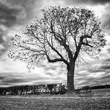End of Summer - Black and white Tree by InspiraImage