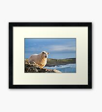 Donegal Sheep Framed Print