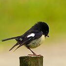 Nobility Runs In The Family - Tom Tit - Stewart Island - NZ by AndreaEL