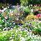 *Cottage Garden - Challenge - Gorgeous Flower Cards*