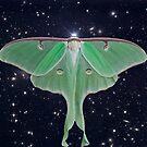Luna Moth 2 by jenithea