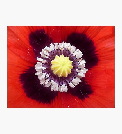 Heart of the Poppy Photographic Print