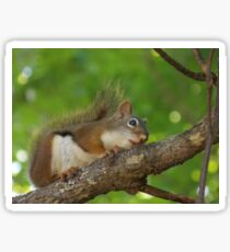 Daydreaming Is for Squirrels Sticker