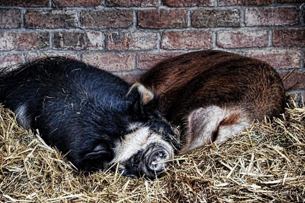 Sleepy Pair Of Pigs by lynn carter