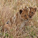 Lion Cubs, Central Kalahari Game Reserve. Botswana, Africa by Adrian Paul