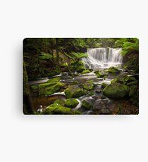 Horseshoe Falls, Mt Field, Tasmania Canvas Print