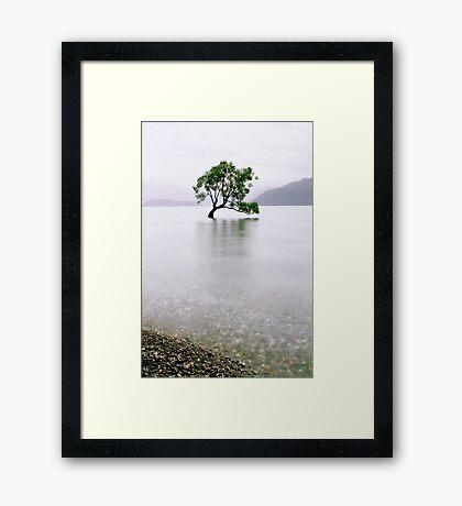 The Tree in the Lake II Framed Print