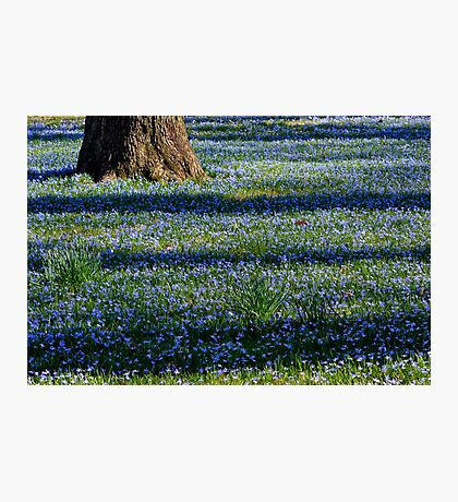 March Bank in Blues  Photographic Print