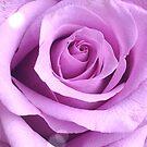 «Rosa» de KellyMcV