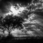 Tree by Nigel Bangert