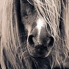 Portrait Of A Pony by Anne Macdonald