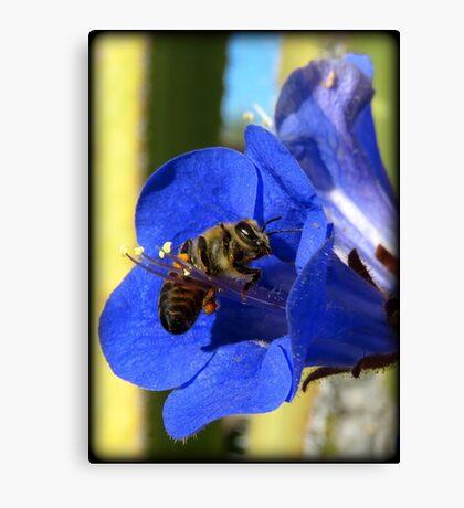 Bee Photogenic  Canvas Print