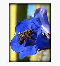 Bee Photogenic  Photographic Print