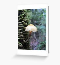 An elegant tree hugger Greeting Card